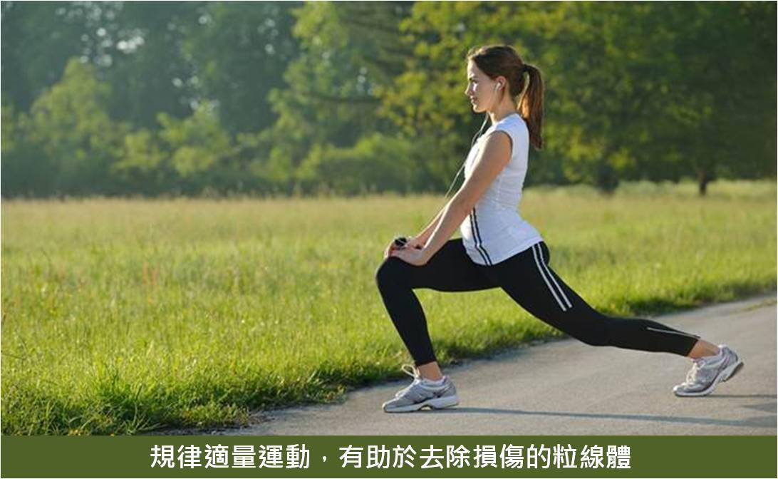 規律適量運動,有助於去除損傷的粒線體
